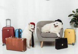 תיקים מזוודות וארנקים